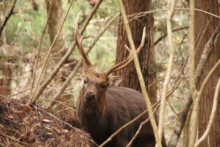 Wakaho is a treasure trove of wildlife ニホンジカは登山の時にみかけることもあります。