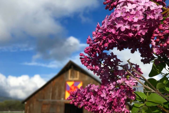 The lilacs and our barn