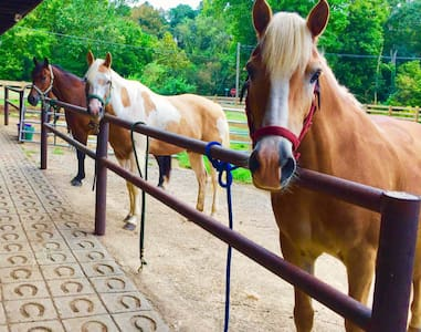 Escape to Horse Farm in the Country; Sleeps 8