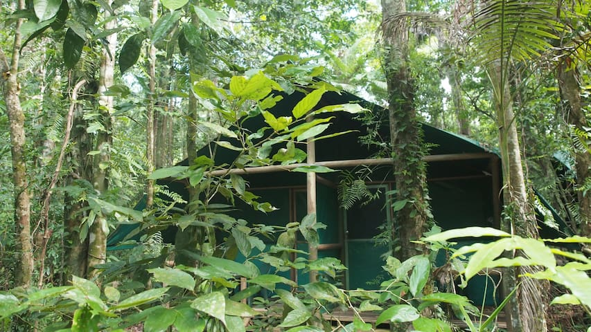 Daintree Crocodylus - Tropical Cabins - Cow Bay - Rumah tumpangan alam semula jadi