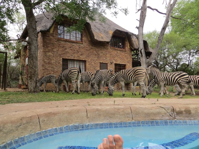 Garden game viewing, nearest to Kruger+river, wifi