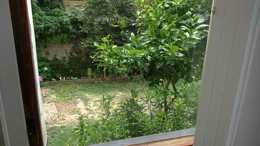 Un precioso limonero en el jardin