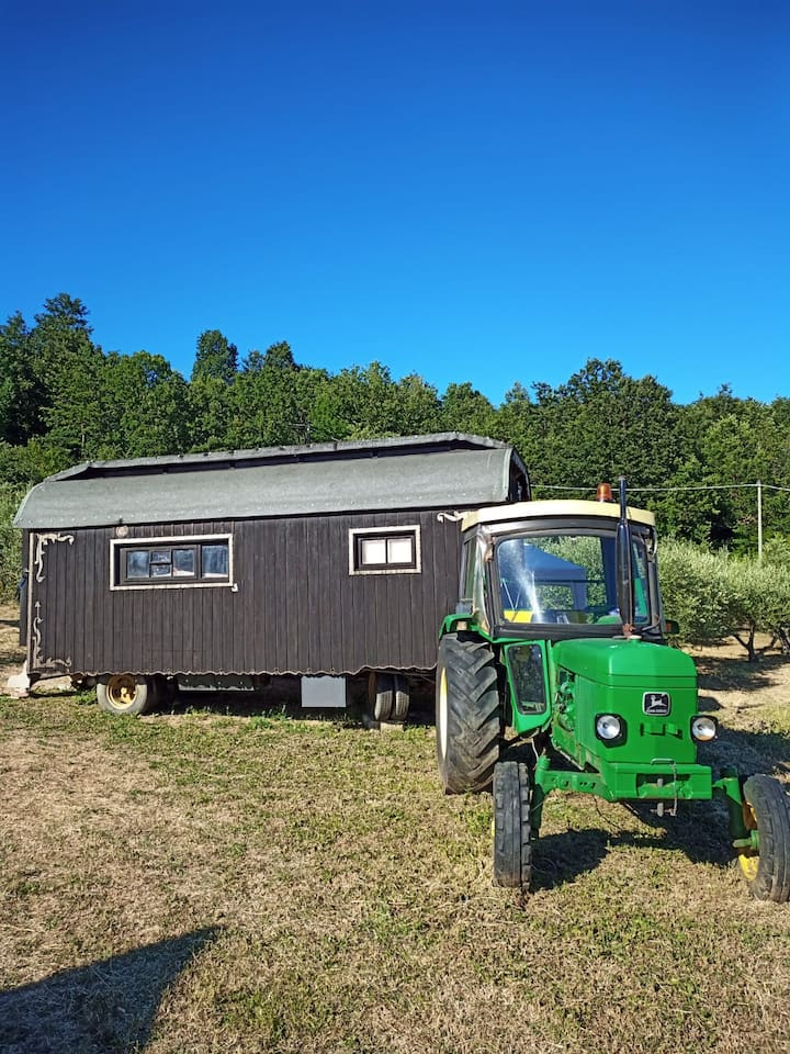 Il carro da circo tra gli ulivi