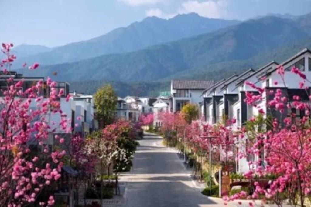 小区樱花盛开时的美景