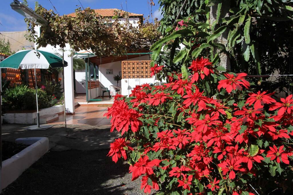 Blütenpracht in der Villa Clara