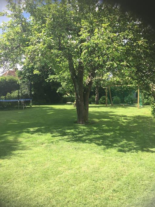 Lovely old garden.