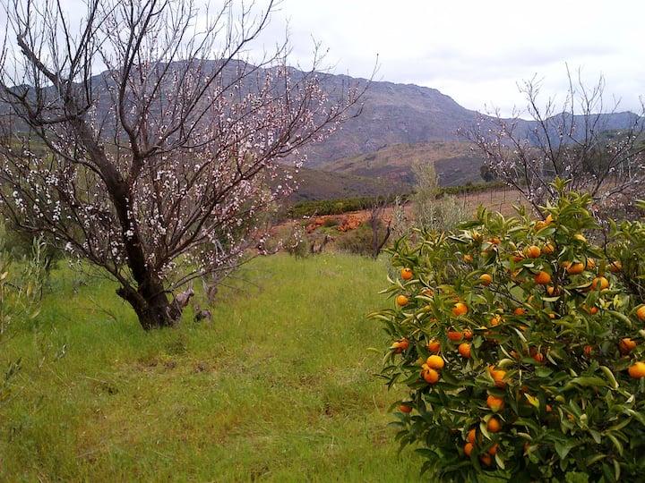 Fynbos Art route