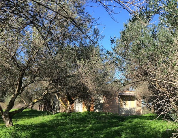 The Olive Shed..off-grid life amonst Olive Trees - Chania - Chatka