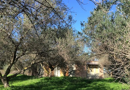 The Olive Shed..off-grid life amonst Olive Trees - ชาเนีย