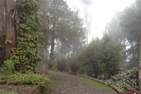 Rustica cabaña en bosque! - San antonio