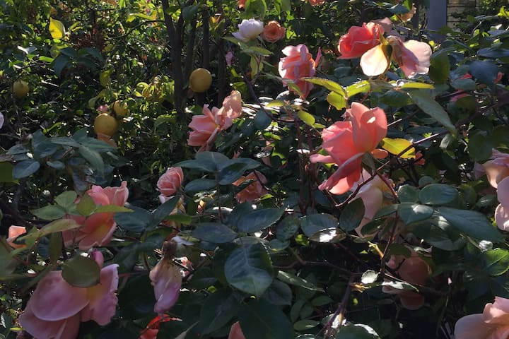 Beautiful Garden Home Near UC Berkeley