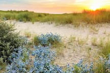 Enjoy the most beautiful SUNSETS from the special dune coast in IJmuiden