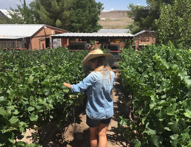 Cowboy Casita in the Heart of a Vineyard - Hillsboro