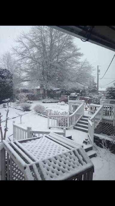 Beautiful winter back yard