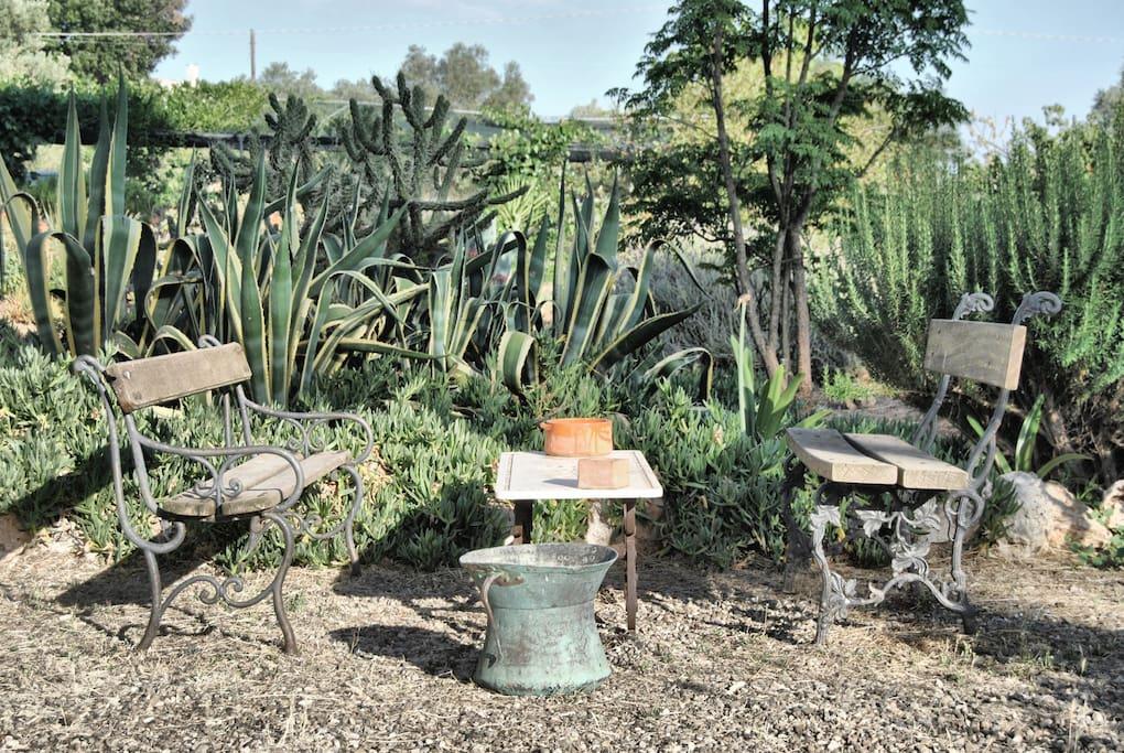 Un angolo del giardino/ A corner of the garden