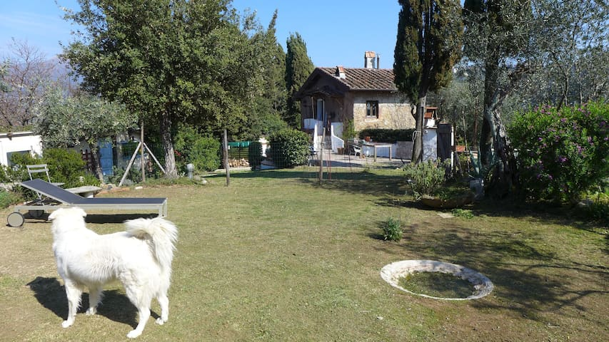 Artist's house immersed in nature - Camaiore - Overig