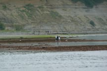 The tidal flats at Lily Point Marine Park