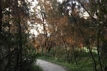 Cullendulla Reserve - Bike Track