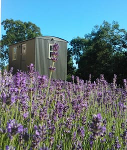 Glamping, Shepherds Hut, New Forest - Lymington