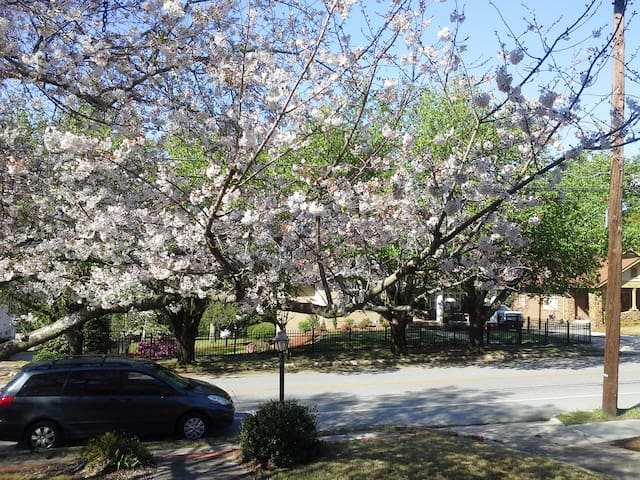 Charming Cherry Blossom Bungalow   - Macon