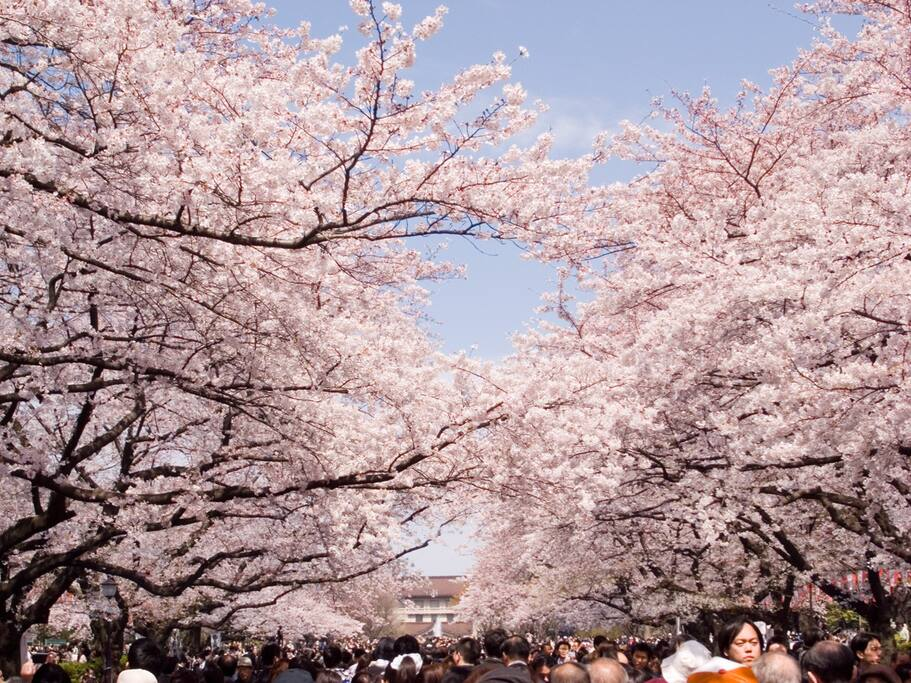Few minutes away from Meguro river, where the famous cheery blossom spots are located.