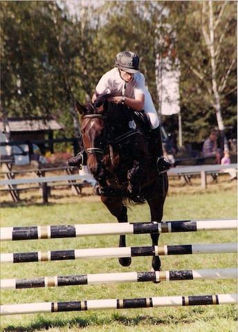 Zimmer/ Pferdeboxen in Gr. Thondorf - Himbergen