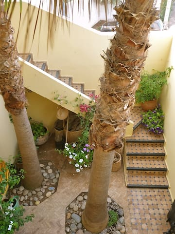 Overlooking the tropical courtyard