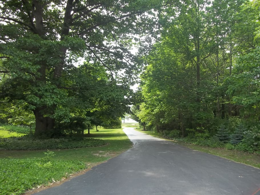 Driveway leading to lake view