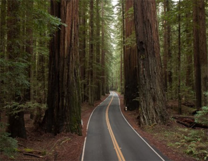 Avenue of the Giants!!