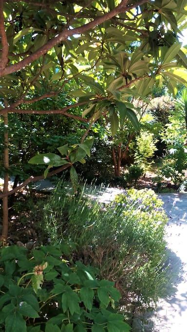 The Mediterranean garden.