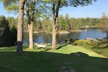 Hammock under soaring Maple trees