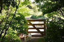 Up the garden path with Scruffy