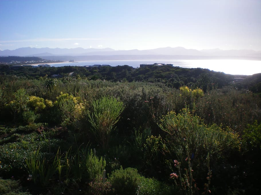 Tsisikamma Mountains in background and fynbos garden in foreground