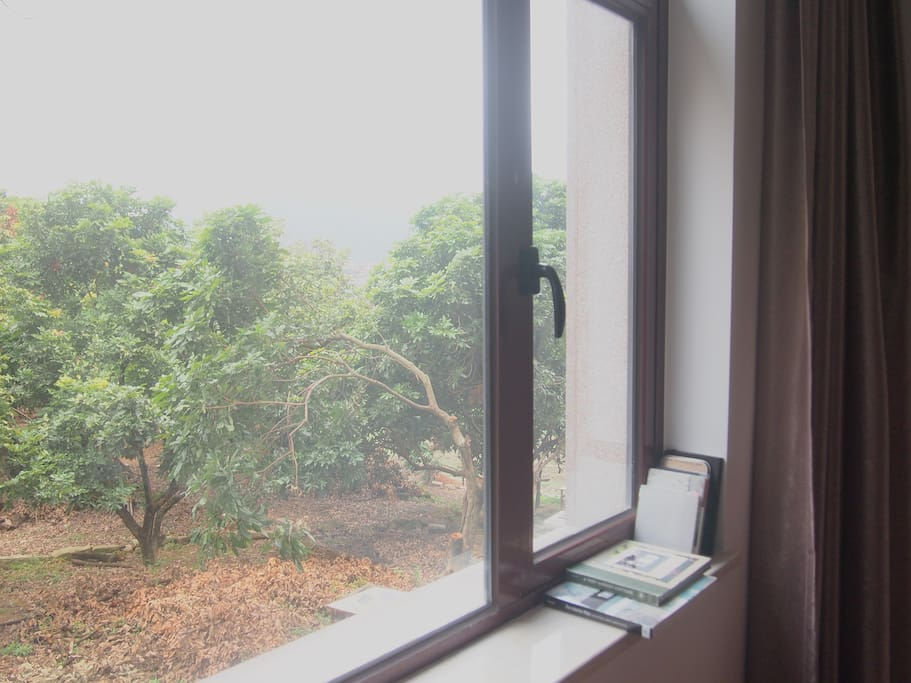 窗外可以看到成片的龙眼树