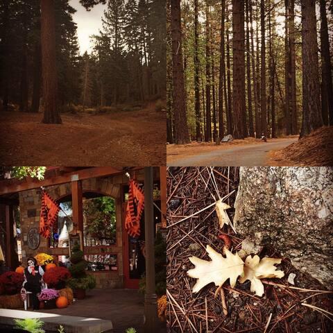 Gorgeous fall foliage, sights in Big Bear.