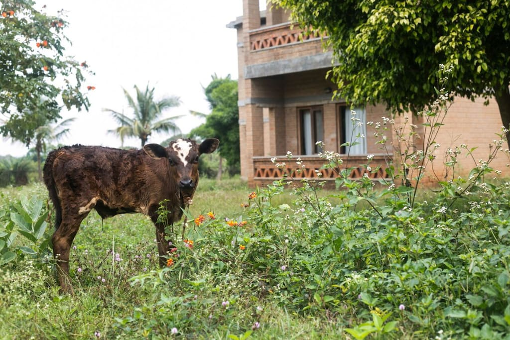 Pet Farm at Our Native Village