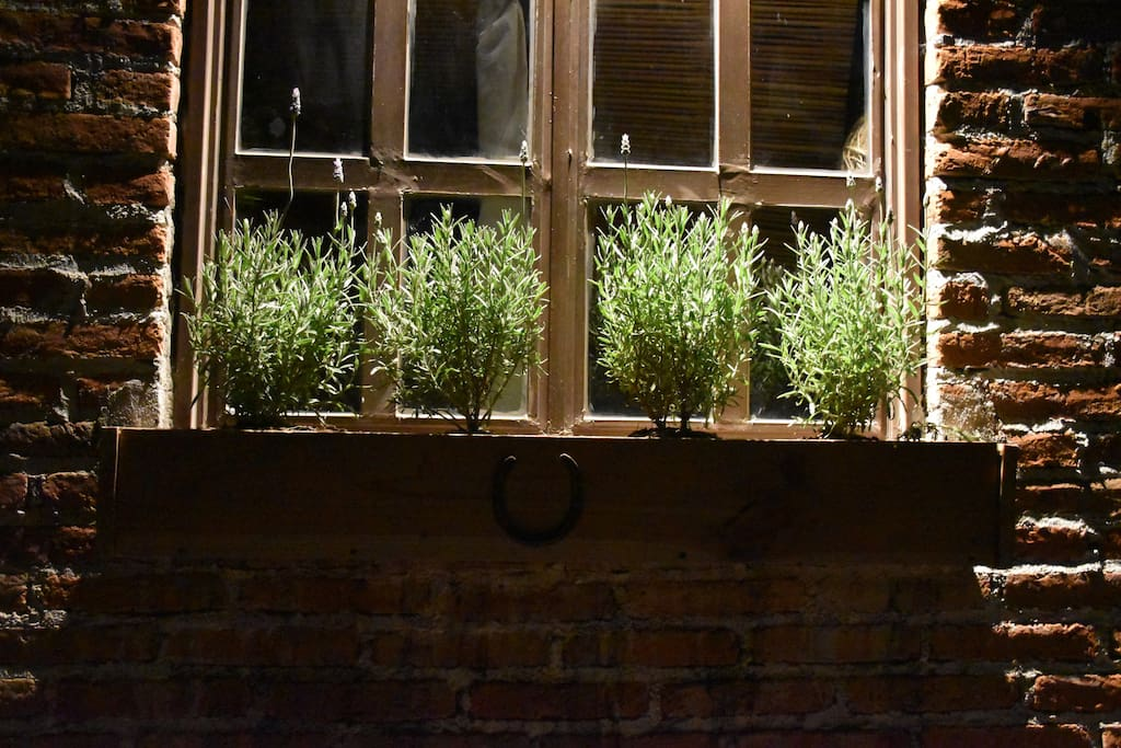 Your window with fresh lavender