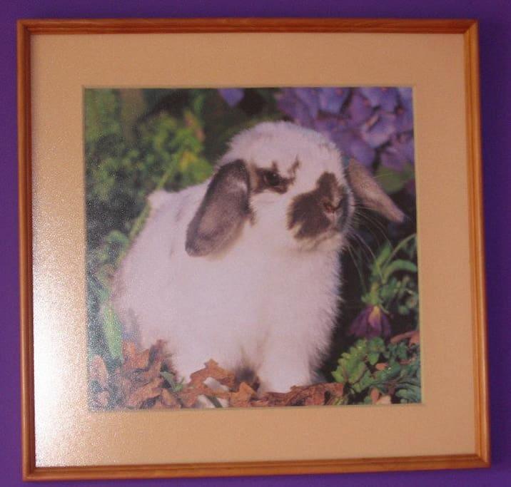 Bunny says Hi!