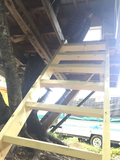 Ladder/stairs into tree house.
