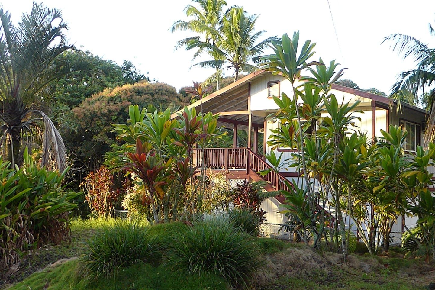 Lush tropical plants surround the house.