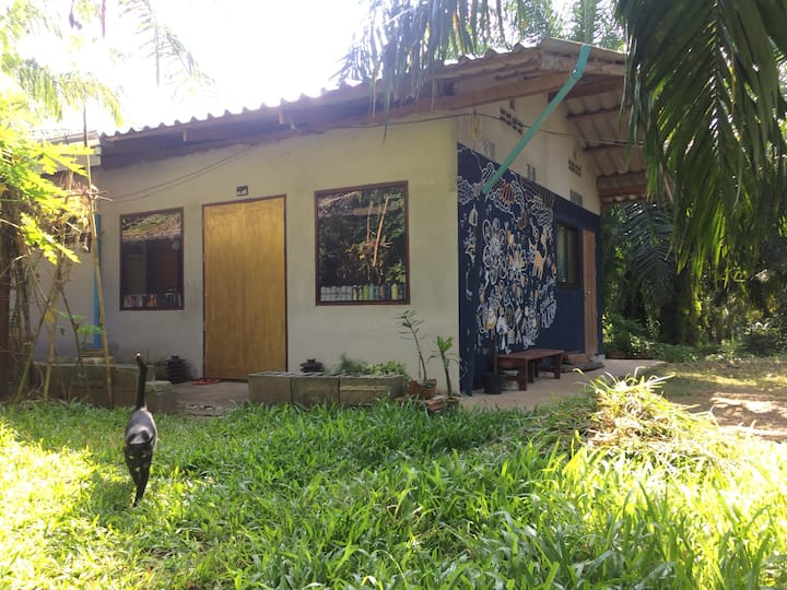 Art, Dance studio with many cats in the jungle