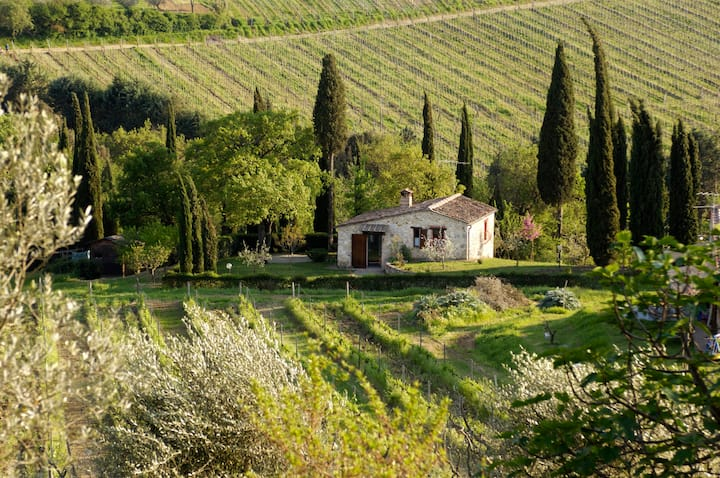 The house in the vineyards...
