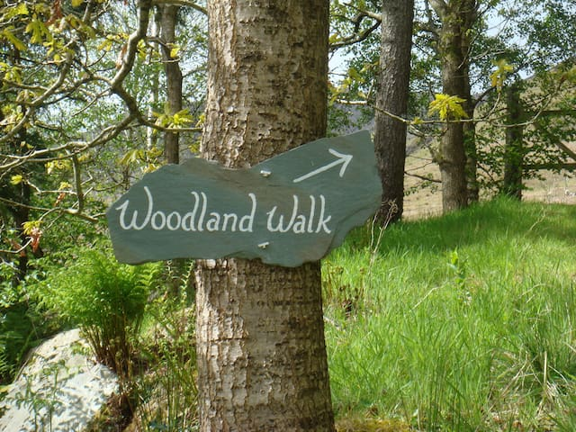 You are free to explore the woodland behind the caravan