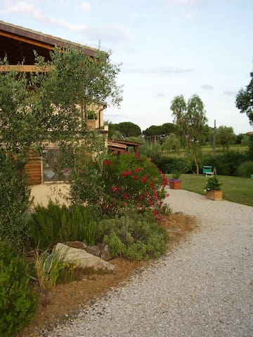 Quiet Apartment In Olive Grove - Ravi - Apartment