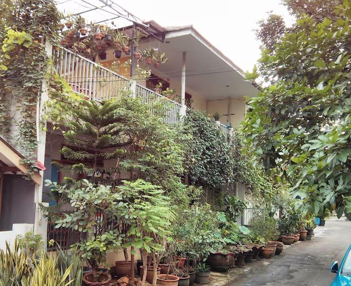 Sabruna: jungle home in Sth Jakarta