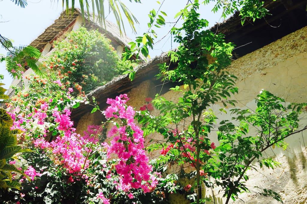 4 Stories with lush garden