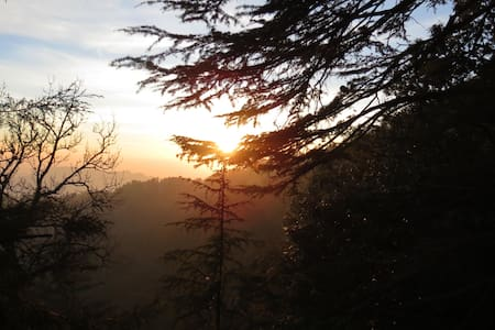 Cedar Tree B&B - Shimla - Bed & Breakfast