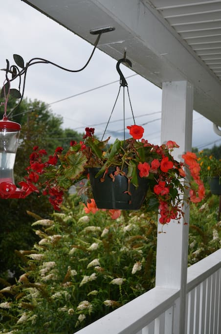 hanging pots and hummingbird nectar on the front porch