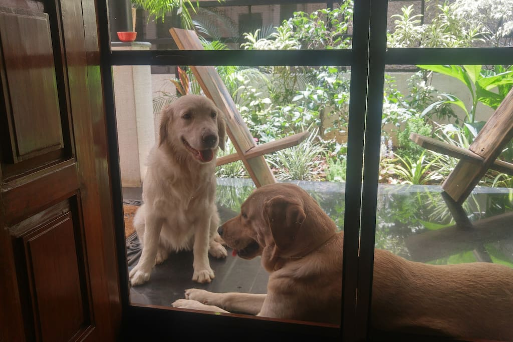 My princess Maya with this handsome, young guest, Casper :)