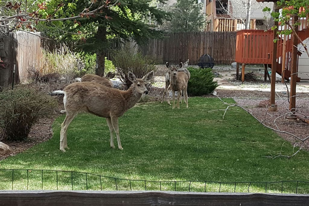 The wildlife is plenty and love to hang out in the neighborhood even the backyard.